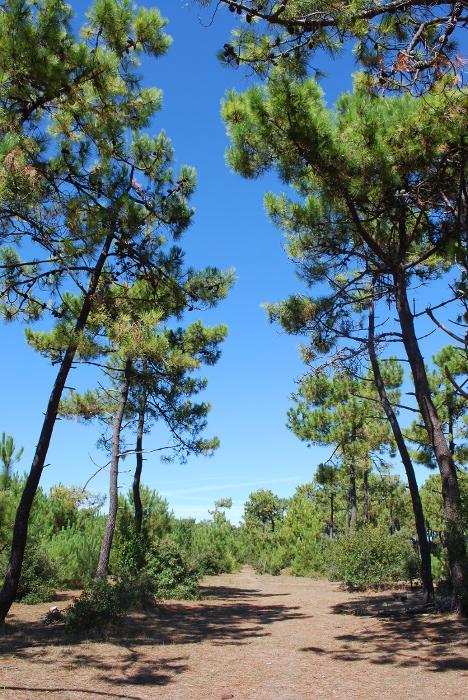"""Résultat de recherche d'images pour """"noirmoutier dune pinede"""""""