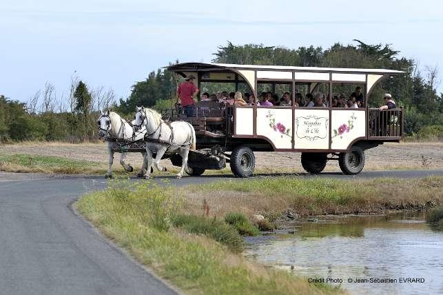 Hippobus de l 39 le balades en hippobus patrimoine et - Office de tourisme noirmoutier ...