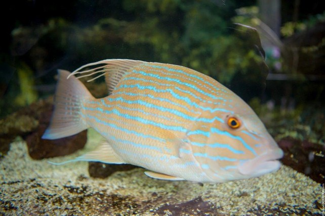 iledenoirmoutier-aquarium-sealand-2-76409