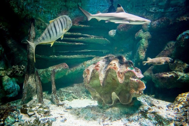 iledenoirmoutier-aquarium-sealand-4-76411