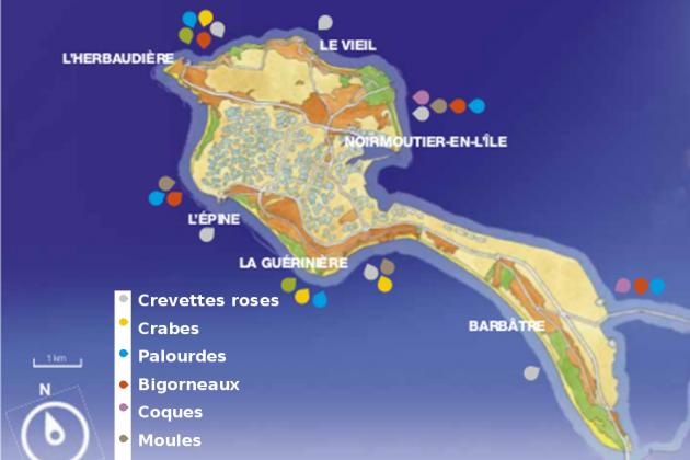 Calendrier Saison Des Moules.La Peche A Pied Sur L Ile De Noirmoutier Informations