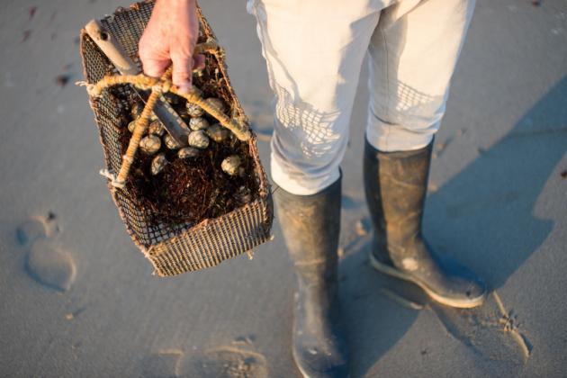 La Pêche à Pied Sur Lîle De Noirmoutier Informations